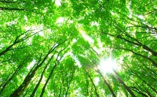 Forest_Bild